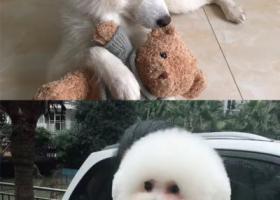 寻狗启示,于重庆中航mytown走失两只狗狗,它是一只非常可爱的宠物狗狗,希望它早日回家,不要变成流浪狗。