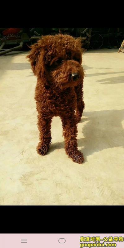 濮阳找狗,真心的寻找爱犬希望他能早日回家,它是一只非常可爱的宠物狗狗,希望它早日回家,不要变成流浪狗。