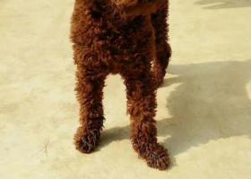 寻狗启示,真心的寻找爱犬希望他能早日回家,它是一只非常可爱的宠物狗狗,希望它早日回家,不要变成流浪狗。