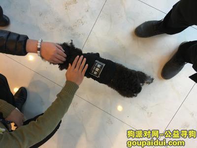 佛山捡到狗,顺德 泮铺湾 黑白相间 穿衣服的狗,它是一只非常可爱的宠物狗狗,希望它早日回家,不要变成流浪狗。