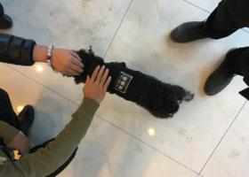 寻狗启示,顺德 泮铺湾 黑白相间 穿衣服的狗,它是一只非常可爱的宠物狗狗,希望它早日回家,不要变成流浪狗。