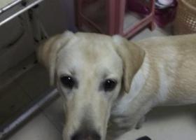 寻狗启示,无锡滨湖区胡埭富润小区一带狗狗丟失,它是一只非常可爱的宠物狗狗,希望它早日回家,不要变成流浪狗。