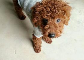 寻狗启示,希望我的帅毛孩纸早日回家,妈妈很担心。定重谢,它是一只非常可爱的宠物狗狗,希望它早日回家,不要变成流浪狗。