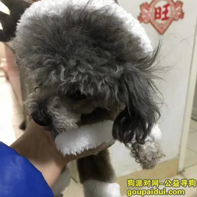 寻狗启示,重金寻狗狗,大家帮帮忙,它是一只非常可爱的宠物狗狗,希望它早日回家,不要变成流浪狗。