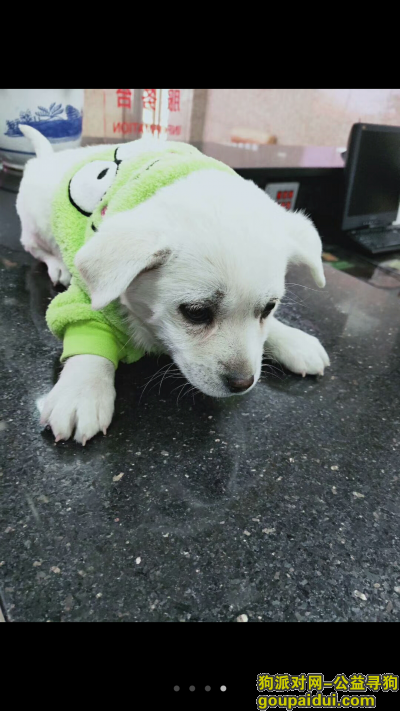 寻狗启示,北京市海淀区三里河路捡到狗狗一只,它是一只非常可爱的宠物狗狗,希望它早日回家,不要变成流浪狗。