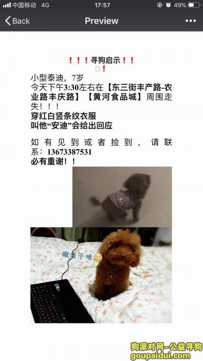 寻狗启示,郑州痛心寻爱狗,麻烦各位了!,它是一只非常可爱的宠物狗狗,希望它早日回家,不要变成流浪狗。