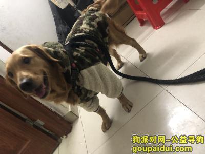 寻狗启示,【寻狗启示】狗狗对我很重要,寻获必有重谢!!!,它是一只非常可爱的宠物狗狗,希望它早日回家,不要变成流浪狗。