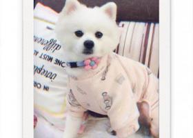 寻狗启示,江宁区竹山路竹山大厦丢失白色博美,它是一只非常可爱的宠物狗狗,希望它早日回家,不要变成流浪狗。