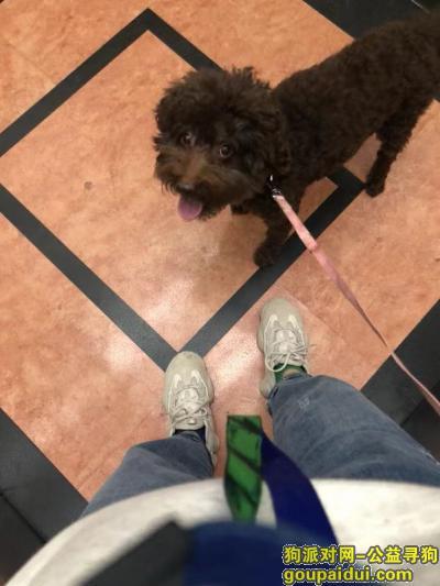 寻狗启示,上海静安区延平路123弄三和花园寻找泰迪,它是一只非常可爱的宠物狗狗,希望它早日回家,不要变成流浪狗。