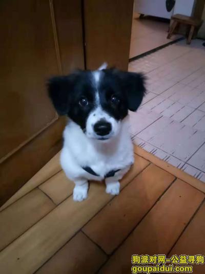 寻狗启示,希望好心人把我的毛孩子送回来,它是一只非常可爱的宠物狗狗,希望它早日回家,不要变成流浪狗。