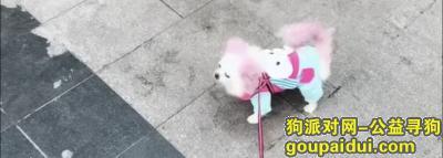 寻狗启示,急找狗狗。 12月13号走丢了,它是一只非常可爱的宠物狗狗,希望它早日回家,不要变成流浪狗。
