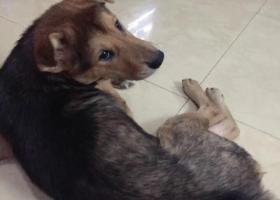 寻狗启示,狗狗走丢三个月 帮忙寻找 心急如焚,它是一只非常可爱的宠物狗狗,希望它早日回家,不要变成流浪狗。