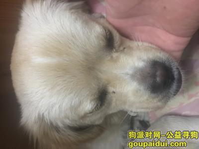 寻狗启示,北京西城捡到小狗,请主人来认领,它是一只非常可爱的宠物狗狗,希望它早日回家,不要变成流浪狗。