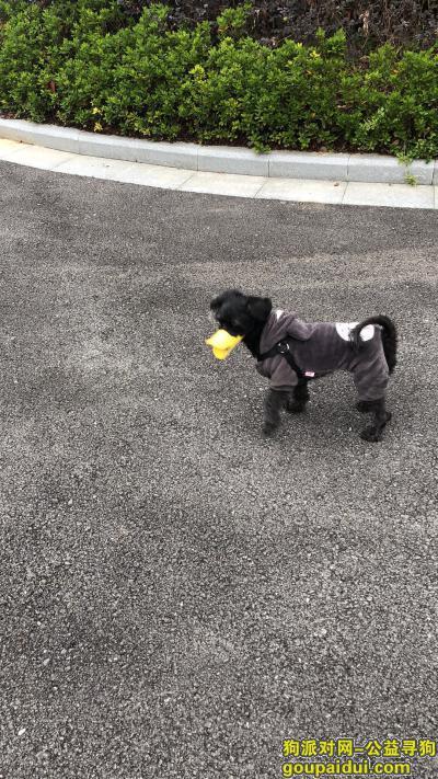 湖州寻狗网,重金寻狗 番茄快回家,它是一只非常可爱的宠物狗狗,希望它早日回家,不要变成流浪狗。