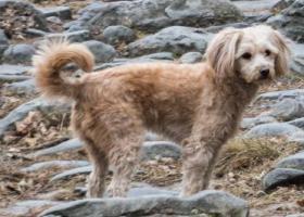 寻狗启示,柚子回家,12月16日北海公园南门走失,它是一只非常可爱的宠物狗狗,希望它早日回家,不要变成流浪狗。