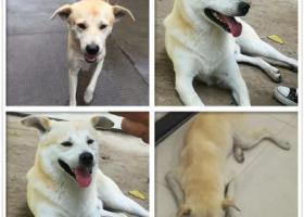 寻狗启示,嘉兴酬金2万寻找爱犬,它是一只非常可爱的宠物狗狗,希望它早日回家,不要变成流浪狗。