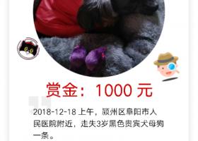 寻狗启示,阜阳寻狗,黑色,红色外套,酬谢1000元,它是一只非常可爱的宠物狗狗,希望它早日回家,不要变成流浪狗。