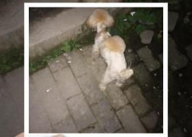 寻狗启示,寻狗主人,融汇温泉城附近,红槽房周边,它是一只非常可爱的宠物狗狗,希望它早日回家,不要变成流浪狗。
