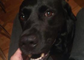 寻狗启示,2018年12月19号在东桥走失,请大家帮忙找找 微信:tw67890,它是一只非常可爱的宠物狗狗,希望它早日回家,不要变成流浪狗。