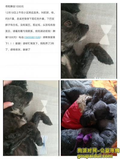 阜阳寻狗启示,寻狗酬谢1000元阜阳,它是一只非常可爱的宠物狗狗,希望它早日回家,不要变成流浪狗。