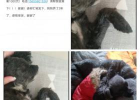 寻狗启示,寻狗酬谢1000元阜阳,它是一只非常可爱的宠物狗狗,希望它早日回家,不要变成流浪狗。