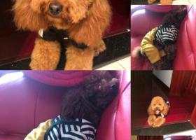 寻狗启示,2018年12月21日晚上8点40分钟走丢了,在上海浦东新区杨南路399弄3号,它是一只非常可爱的宠物狗狗,希望它早日回家,不要变成流浪狗。