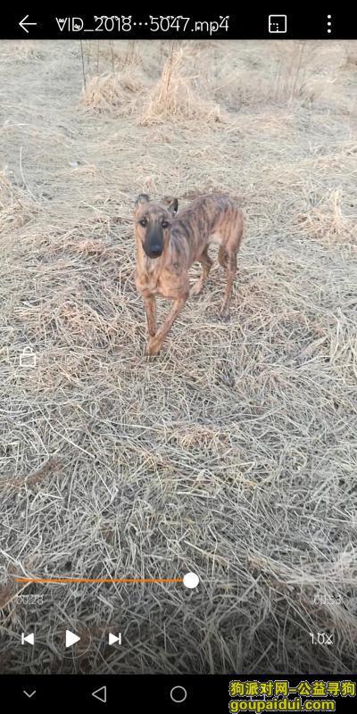 烟台寻狗,以找回,它是一只非常可爱的宠物狗狗,希望它早日回家,不要变成流浪狗。