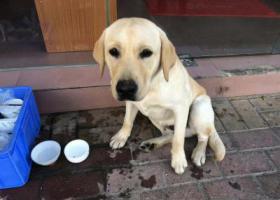 寻狗启示,寻爱狗,在家附近不见,它是一只非常可爱的宠物狗狗,希望它早日回家,不要变成流浪狗。