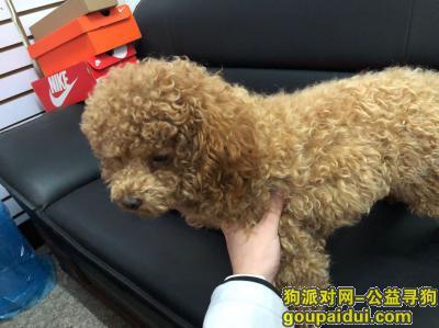 义乌捡到狗,五爱新村捡到一只泰迪,它是一只非常可爱的宠物狗狗,希望它早日回家,不要变成流浪狗。