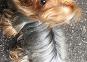 寻狗启示,2018年12月23日和狗狗走失,急急急,它是一只非常可爱的宠物狗狗,希望它早日回家,不要变成流浪狗。