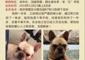 寻狗启示,南京栖霞区兴都花园87号酬谢五千元寻找法斗,它是一只非常可爱的宠物狗狗,希望它早日回家,不要变成流浪狗。