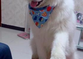 寻狗启示,寻找爱犬 盼望它早日回家。,它是一只非常可爱的宠物狗狗,希望它早日回家,不要变成流浪狗。