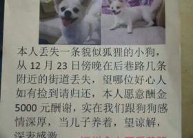寻狗启示,寻找狗狗  望好心人或者是知情人联系我18250156785林,它是一只非常可爱的宠物狗狗,希望它早日回家,不要变成流浪狗。
