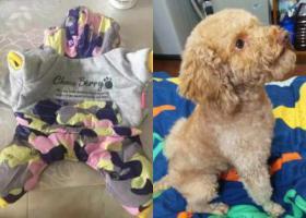寻狗启示,慈溪市横河镇宜青桥酬谢一万元寻找泰迪,它是一只非常可爱的宠物狗狗,希望它早日回家,不要变成流浪狗。