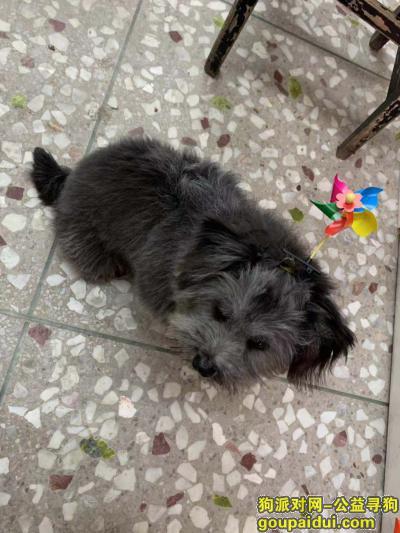 三亚寻狗启示,12月29在三亚大东海走丢,它是一只非常可爱的宠物狗狗,希望它早日回家,不要变成流浪狗。