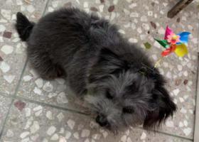 寻狗启示,12月29在三亚大东海走丢,它是一只非常可爱的宠物狗狗,希望它早日回家,不要变成流浪狗。
