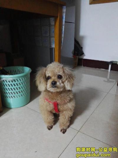 烟台捡到狗,18年12月30号下午,它是一只非常可爱的宠物狗狗,希望它早日回家,不要变成流浪狗。