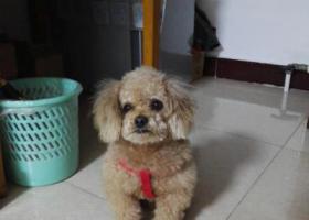 寻狗启示,18年12月30号下午,它是一只非常可爱的宠物狗狗,希望它早日回家,不要变成流浪狗。