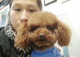 寻狗启示,希望大家可以帮忙找找我家的狗狗,现在很着急啊,它是一只非常可爱的宠物狗狗,希望它早日回家,不要变成流浪狗。
