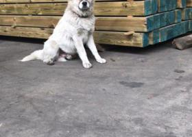 寻狗启示,爱犬丢失  望好心朋友  帮忙关注   如有寻获   重金酬谢  谢谢谢谢,它是一只非常可爱的宠物狗狗,希望它早日回家,不要变成流浪狗。