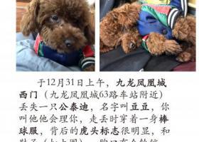 寻狗启示,寻找爱狗,赏金1000元,它是一只非常可爱的宠物狗狗,希望它早日回家,不要变成流浪狗。