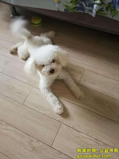 滁州找狗,18年10月末于滁州学院附近丢失了比熊,它是一只非常可爱的宠物狗狗,希望它早日回家,不要变成流浪狗。