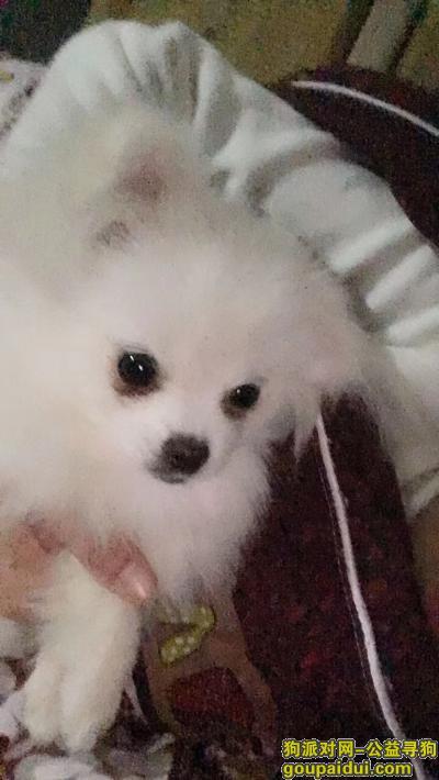 寻狗启示,南湖家园寻狗启示,谢谢,它是一只非常可爱的宠物狗狗,希望它早日回家,不要变成流浪狗。