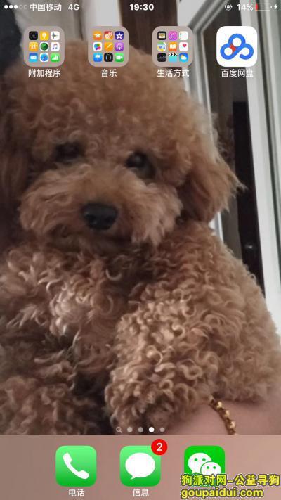 黄冈寻狗网,好心人找到我重谢!陪伴我很多年的狗狗 对我非常重要!,它是一只非常可爱的宠物狗狗,希望它早日回家,不要变成流浪狗。