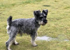 寻狗启示,寻找我遗失的奔奔!好想你????,它是一只非常可爱的宠物狗狗,希望它早日回家,不要变成流浪狗。