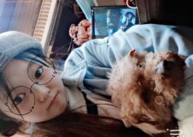 寻狗启示,我家泰迪丢了万达2号门跑丢了,它是一只非常可爱的宠物狗狗,希望它早日回家,不要变成流浪狗。