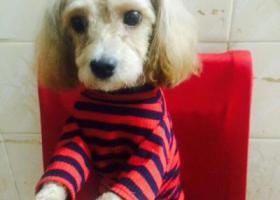 寻狗启示,2018.12.15爱狗泰迪在蓬江区北郊天龙二街不见了,它是一只非常可爱的宠物狗狗,希望它早日回家,不要变成流浪狗。