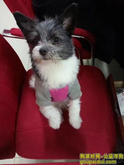 马鞍山找狗,小土狗19年1月10日花山区丢失,它是一只非常可爱的宠物狗狗,希望它早日回家,不要变成流浪狗。