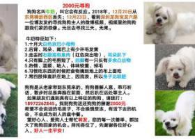 寻狗启示,寻京巴小母狗,狗狗从东莞横沥丢失的,它是一只非常可爱的宠物狗狗,希望它早日回家,不要变成流浪狗。