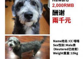 寻狗启示,上海闵行区航华一村一街坊南小区寻找爱犬,它是一只非常可爱的宠物狗狗,希望它早日回家,不要变成流浪狗。